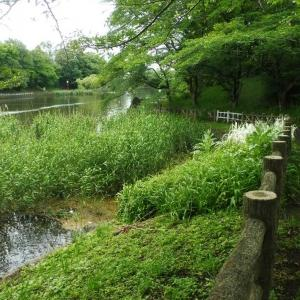 千代田の池