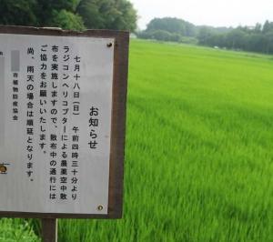 田んぼまでの散歩