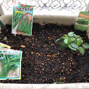 ベランダ菜園 / 今年の夏野菜はゴーヤ、枝豆、モロヘイヤ、パクチーに決まり!