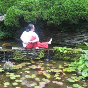 蓮の花・汚れた池、