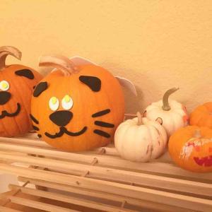 【アメリカで秋と言えば】かぼちゃ!アメリカのかぼちゃ、食べれるの?