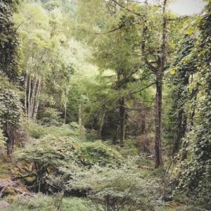 トリカブトの森。
