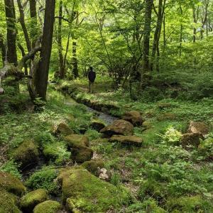 援軍が帰った日、ハンモック♪そして森へお散歩に。