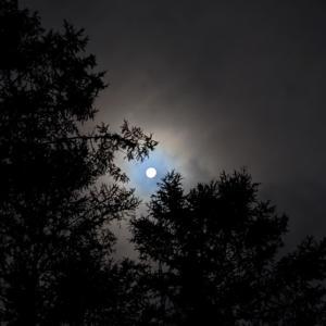森から、2021年の中秋の名月。