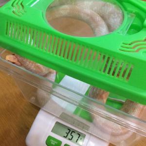 生後16ヶ月の体重測定
