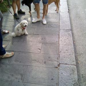 犬の散歩休憩中の朝の井戸端会議。