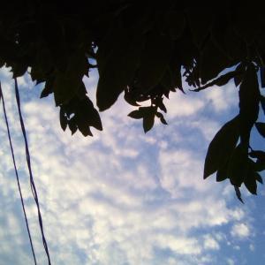 うろこ雲とローレルの葉☆