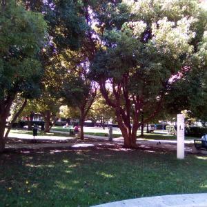 公園の木陰でひとやすみ。