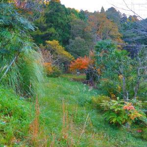 深まる秋とアナログの心