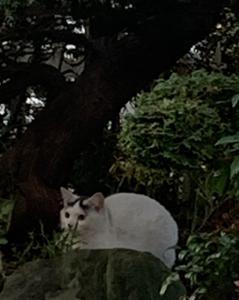 新入り猫リコのこと③ 父親捜しの旅 あっけなく終了