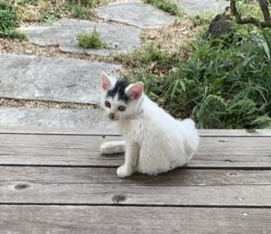 新入り猫リコのこと ④