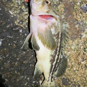 大潮6/23のヒラメネライ釣行