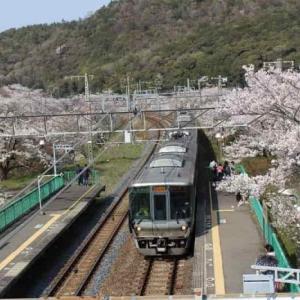 山中渓の桜祭り【アクセス・駐車場・ライトアップ】