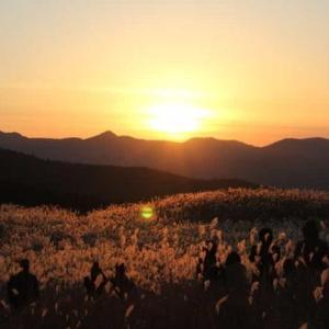 曽爾高原~黄金色に輝くススキの草原【アクセス・駐車場】