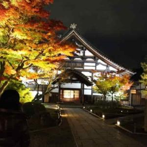 高台寺~圓徳院【夜間特別拝観】紅葉のライトアップ【御朱印】