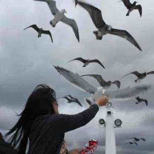 伊根湾めぐり遊覧船~無数のカモメと戯れる【アクセス・駐車場】