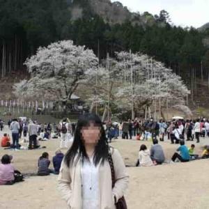 淡墨公園・淡墨桜【アクセス・駐車場・御朱印】樹齢1500年の名桜