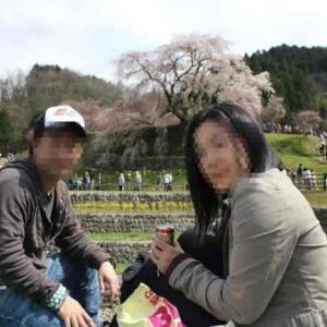 又兵衛桜・本郷の瀧桜【アクセス・駐車場】樹齢300年の名桜