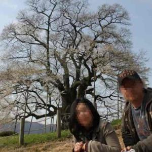醍醐桜~樹齢1000年の一本桜の名桜【アクセス・駐車場】