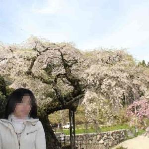 瀧蔵権現桜【瀧蔵神社】樹齢400年の名桜【アクセス・駐車場】