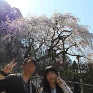 奥山田のしだれ桜【アクセス・駐車場】樹齢1300年の一本桜
