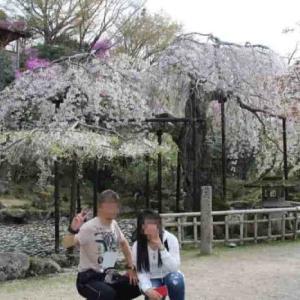 竹林院群芳園【アクセス・駐車場・御朱印】天人之桜は樹齢300年
