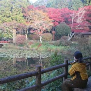 鳥見山公園~紅葉の見どころ紹介【アクセス・駐車場】