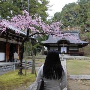弘川寺の隅屋桜【アクセス・駐車場】大阪屈指のお花見スポット