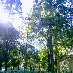第413回ZUMBAサークル無事終了。森を見ながらZUMBAありがとうございました(^O^)