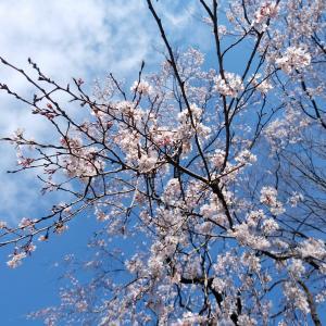 もうすぐ四月だね~ということで四月ZUMBA予約受付スタートです(モリノスタジオのみ)
