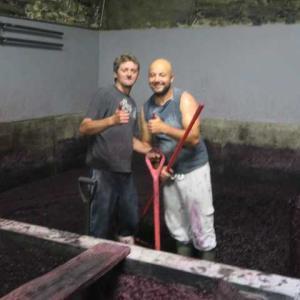 6度目のポルトガル(27)残念、ぶどうの収穫は2日前に終わっていた、、