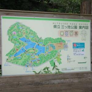 暑くても歩かなくちゃ、、、いつもの三ツ池公園散策!