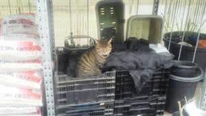 外の猫ちゃんたちを守ろう