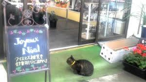 新新新猫参上 ~お店にやって来るノラちゃんたち~