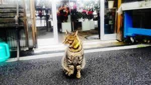 レオよ、堪えてくれ ~後ろ髪引きまくり猫の試練~