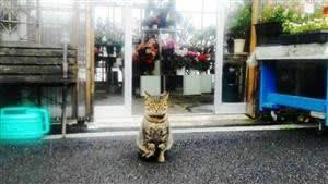 看板猫、仕事中