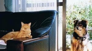 ソファーが綴るネコ模様
