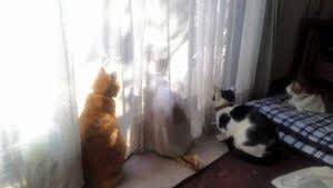 ピリリとホロリ 「猫から目線」