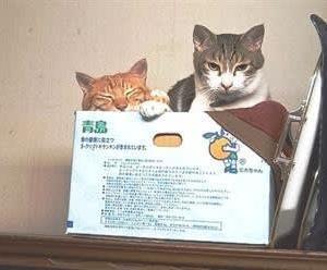 猫に不幸という言葉はない