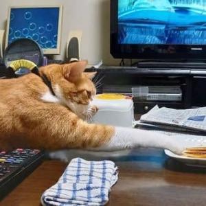 オイタは猫の本懐なり