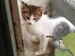 新顔子猫ちゃん参上 ちびたん
