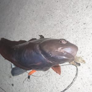 【釣行記】アナゴにはまだ早いと分かりつつも・・・