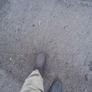 【釣行記】1ヶ月ぶりの砂