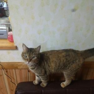 猫の紹介です!