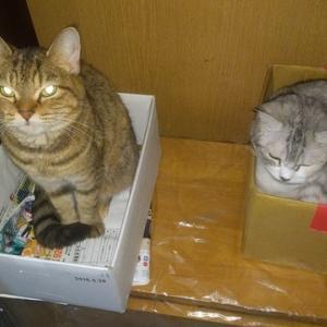 再開、猫は睨んでます。。。。