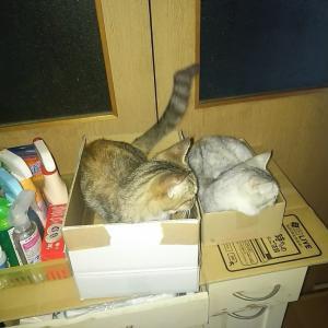 猫の習性は結構、なぞ!!