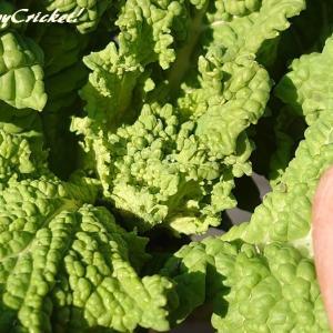 そろそろ菜花の収穫が近づいてきましたワク♪〃o(*´▽`*)o〃ワク♪