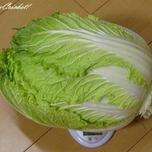 白菜のアブラムシは凍死させました(-人-)…†アーメン