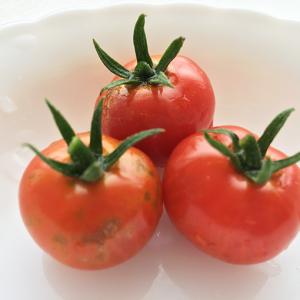 ミニトマト初収穫!