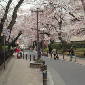 桜とカフェと居酒屋の彩る街東林間 神奈川県相模原市南区